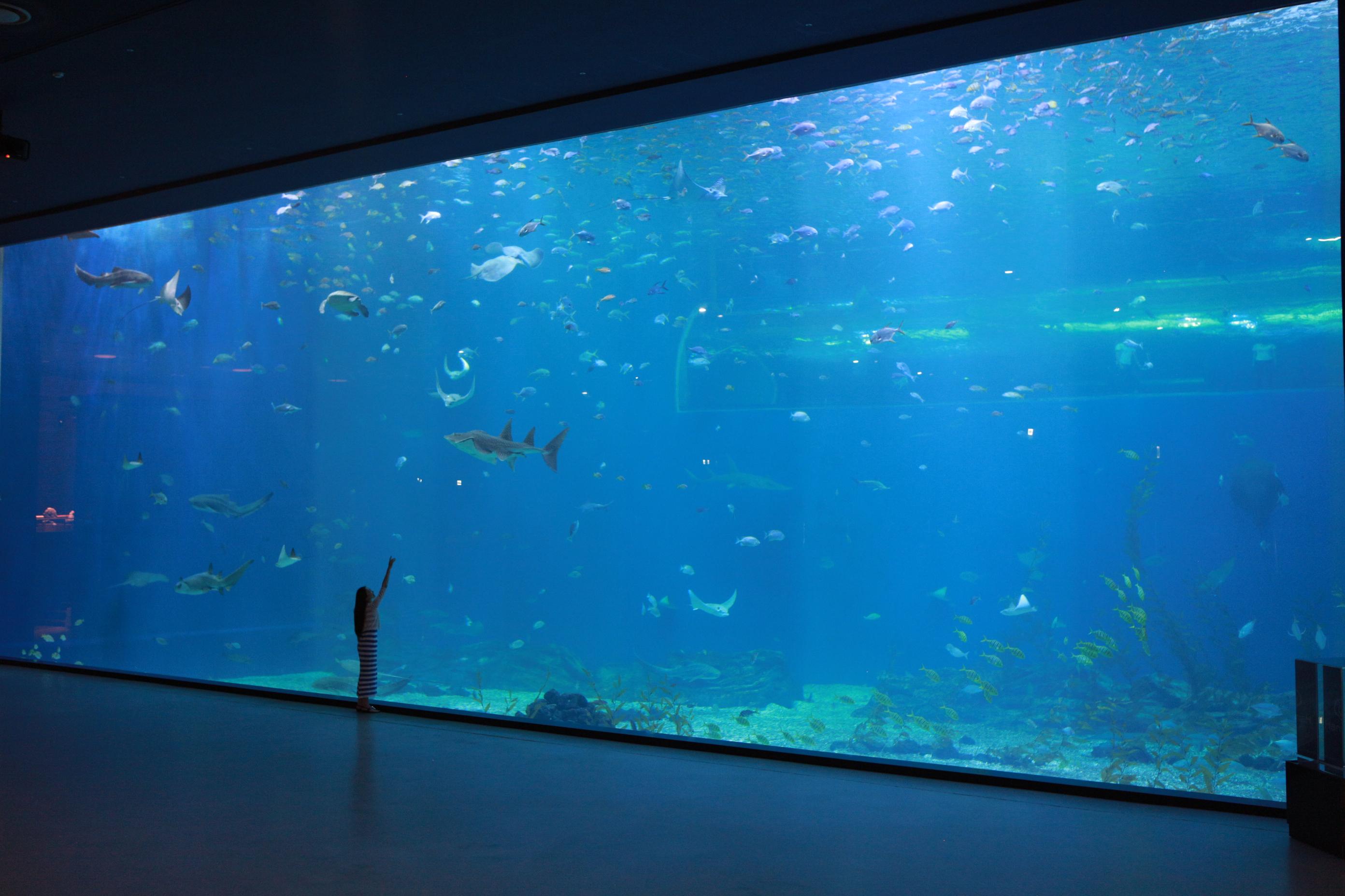 壁纸 海底 海底世界 海洋馆 水族馆 2784_1856